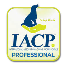 Trainers for Maine Dog Training Company are IACP Professionals
